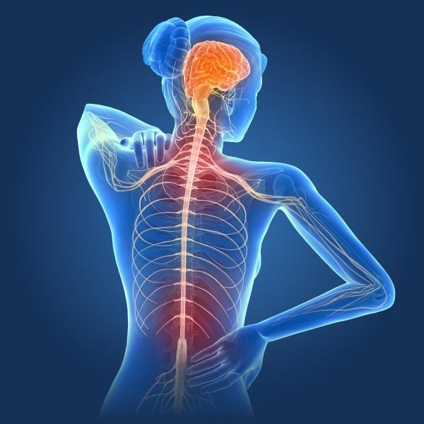 Nemechek Autonomic Medicine Fatigue