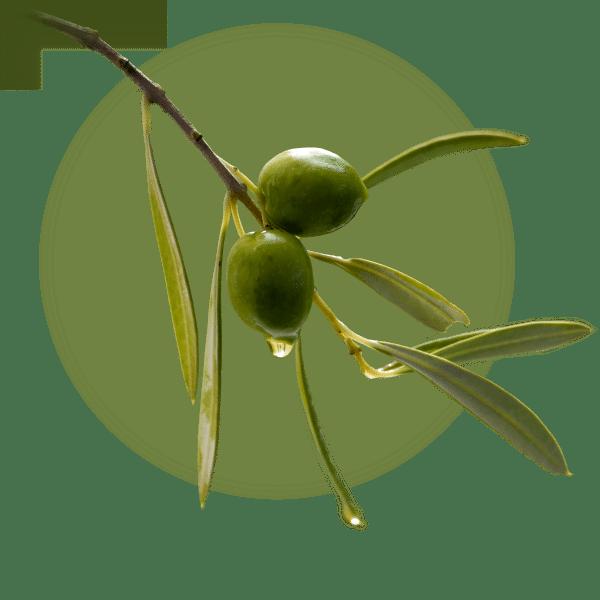 Nemechek Autonomic Medicine Recovery Feat Olive